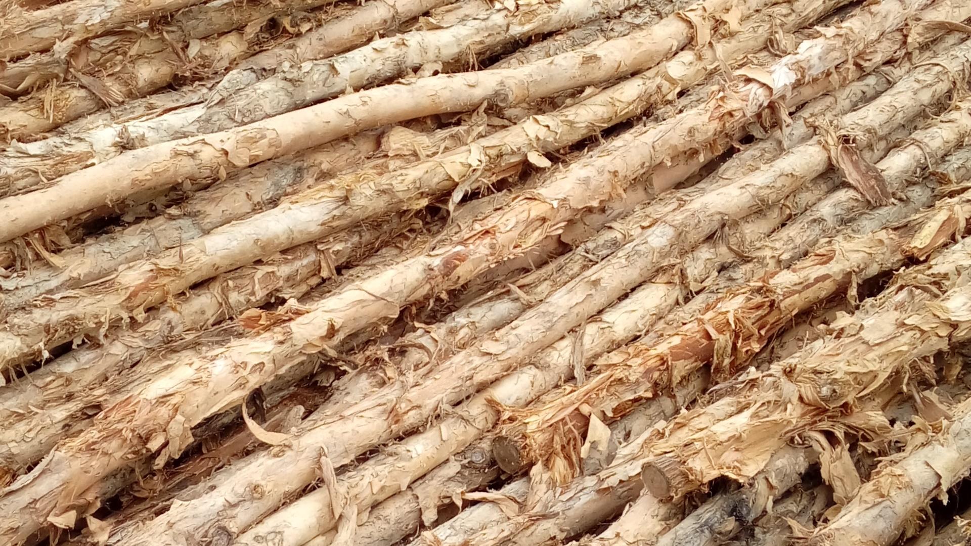 Jual kayu dolken gelam 6 - 8 cm 4 m