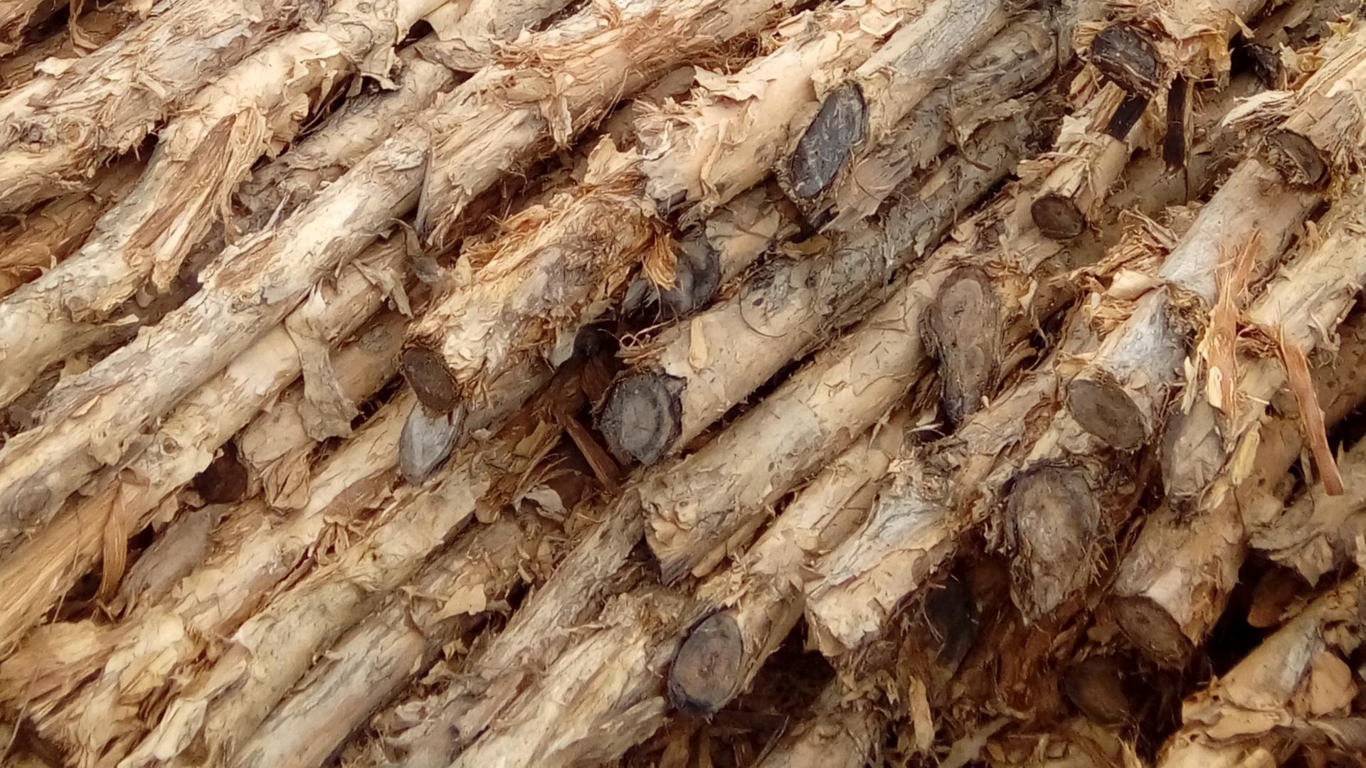 Jual kayu dolken gelam 4 - 6 cm 4 m